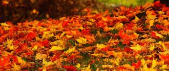 Моя любимая осень