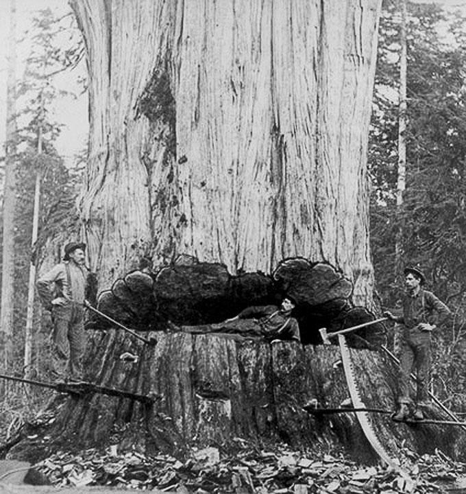 Исторические деревья