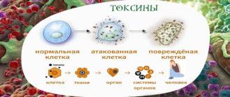 Симптомы очищения организма